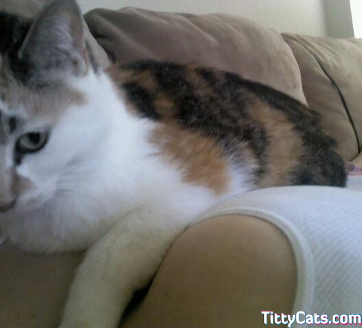 This kitty's pillows appear to be well fluffed.